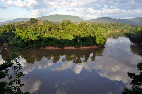 ILei declara Organização da Sociedade Civil da Biodiversidade como entidade de utilidade pública